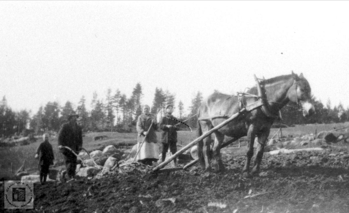 Arbeid m/hest, Valeborkk i Bjelland.