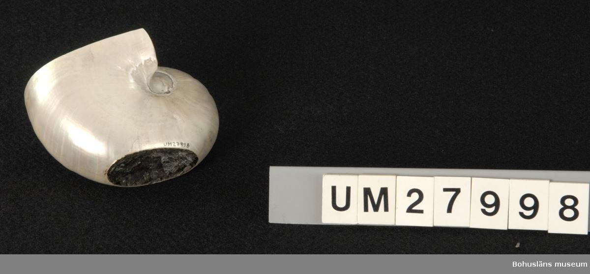 Utsidans yttersta skikt på bläckfiskens skal är avlägsnat så att man erhållit en pärlemoskimrande yta. En större del av skalets öppning är avsågat, likaså en del av rundningen. Syftet med detta var för att erhålla ett stående skålliknande objekt.  Höjd 8 cm, bredd 8,7 cm, djup 12 cm. Skador: Två större hål på den inre runda delen.  Mollusksamling Låda 30.  Ur Nationalencyklopedin, NE.se:  Pärlbåt Pärlbåtar, Nautili´da, ordning i bläckfisköverordningen nautiloidéer. Det enda nutida släktet är pärlbåtar (Nautilus) med 5-6 arter i Stilla havet och Indiska oceanen. Pärlbåtar skiljer sig från andra nu levande bläckfiskar genom att de har ett kamrat, yttre skal och 80 - 90 klibbiga tentakler, armar, utan sugskålar. I mantelhålan finns två par gälar. Djurets mjukdelar ligger i den yttersta kammaren men står via ett rör i förbindelse med de inre kamrarna, som är gas- och vätskefyllda. Genom förändring av proportionen mellan gas och vätska kan tätheten och därmed flytförmågan ändras. Arterna lever i allmänhet på några hundra meters djup och simmar alldeles ovanför bottnen, men går under natten upp på grundare vatten.