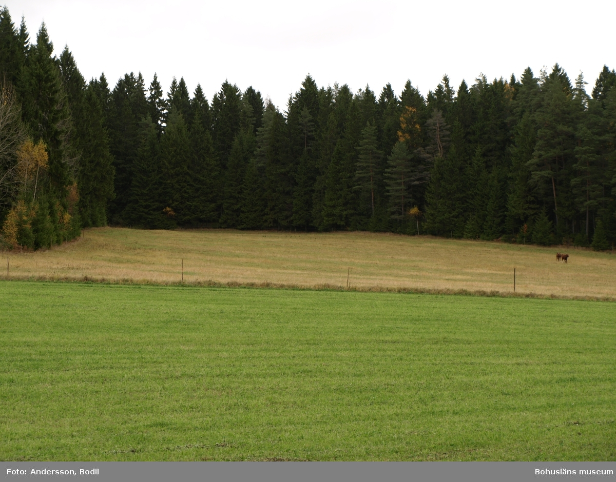 Resterna av stigen går inne i skogen men skogsbrynet i bortre änden av åkermarken. Foto: Bodil Andersson, Østfoldmuseene/Halden historiske Samlinger