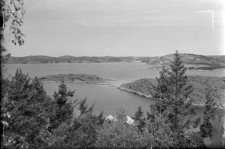Svineviks kile 1955