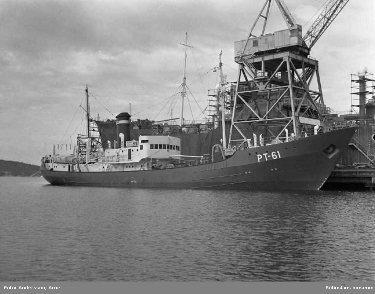M/S Vodnik PT 61 D.W.T. 485 Rederi Murmanruba, Murmansk Kölsträckning 51-04-25 Nr. 118 Leverans 52-05-26 Ångtrålare
