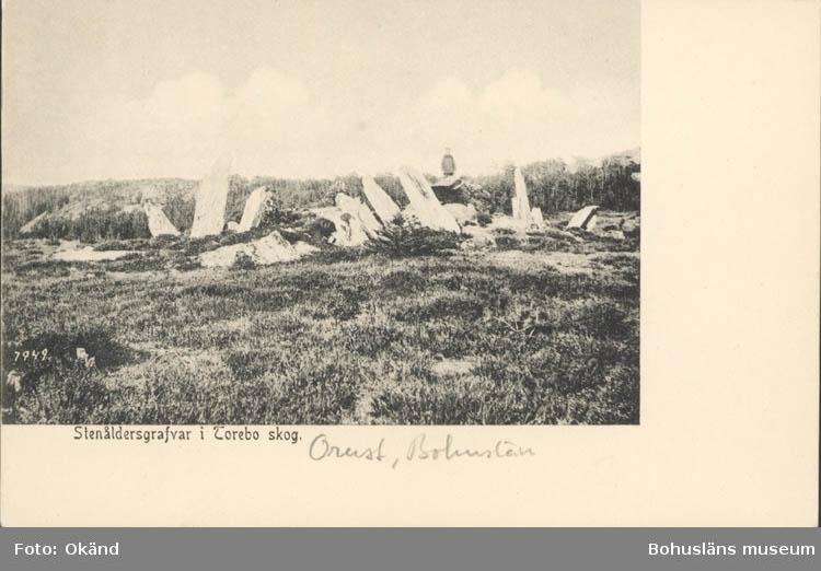 """Tryckt text på kortet: """"Stenåldersgrafvar Torebo skog."""" Noterat på kortet: """"Orust, Bohuslän."""""""