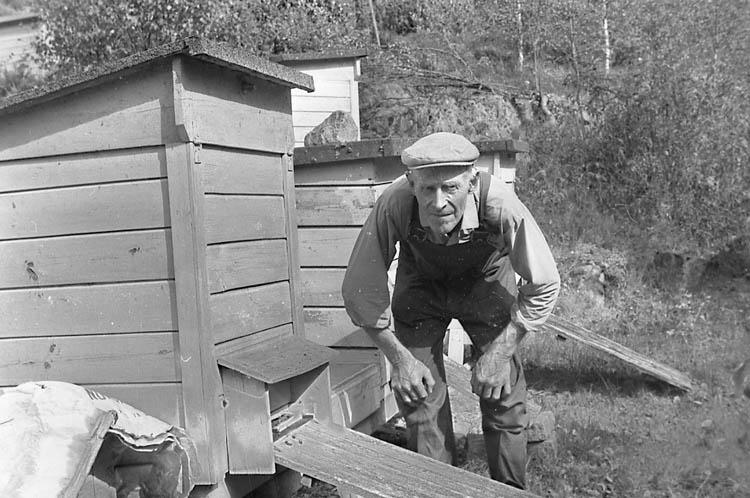 """Enligt fotografens notering: """"John Johansson, biodlare, Immestad, Brastad""""."""