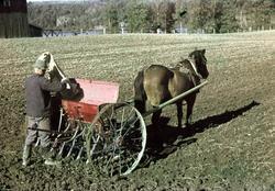 Vårbruk. Sådd med en häst och såmaskin.