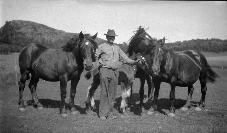 """Enligt notering: """"En man fyra hästar. Anders Andersson Trättestad""""."""