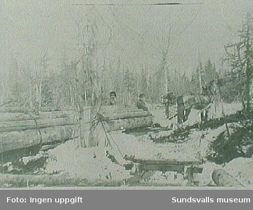 Skogsarbete troligen hos Gunnar Näslund.