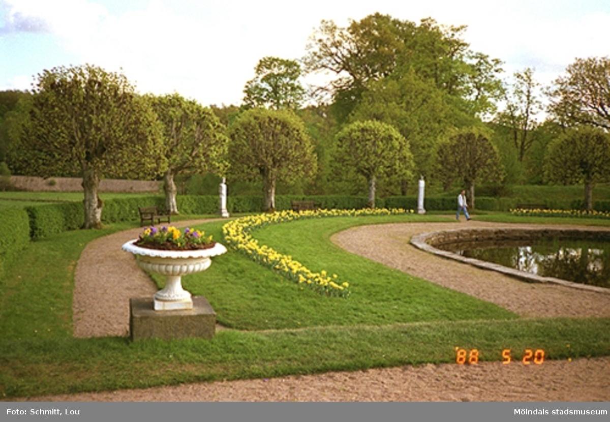 Blommor och träd kring dammen i Gunnebo slottspark.