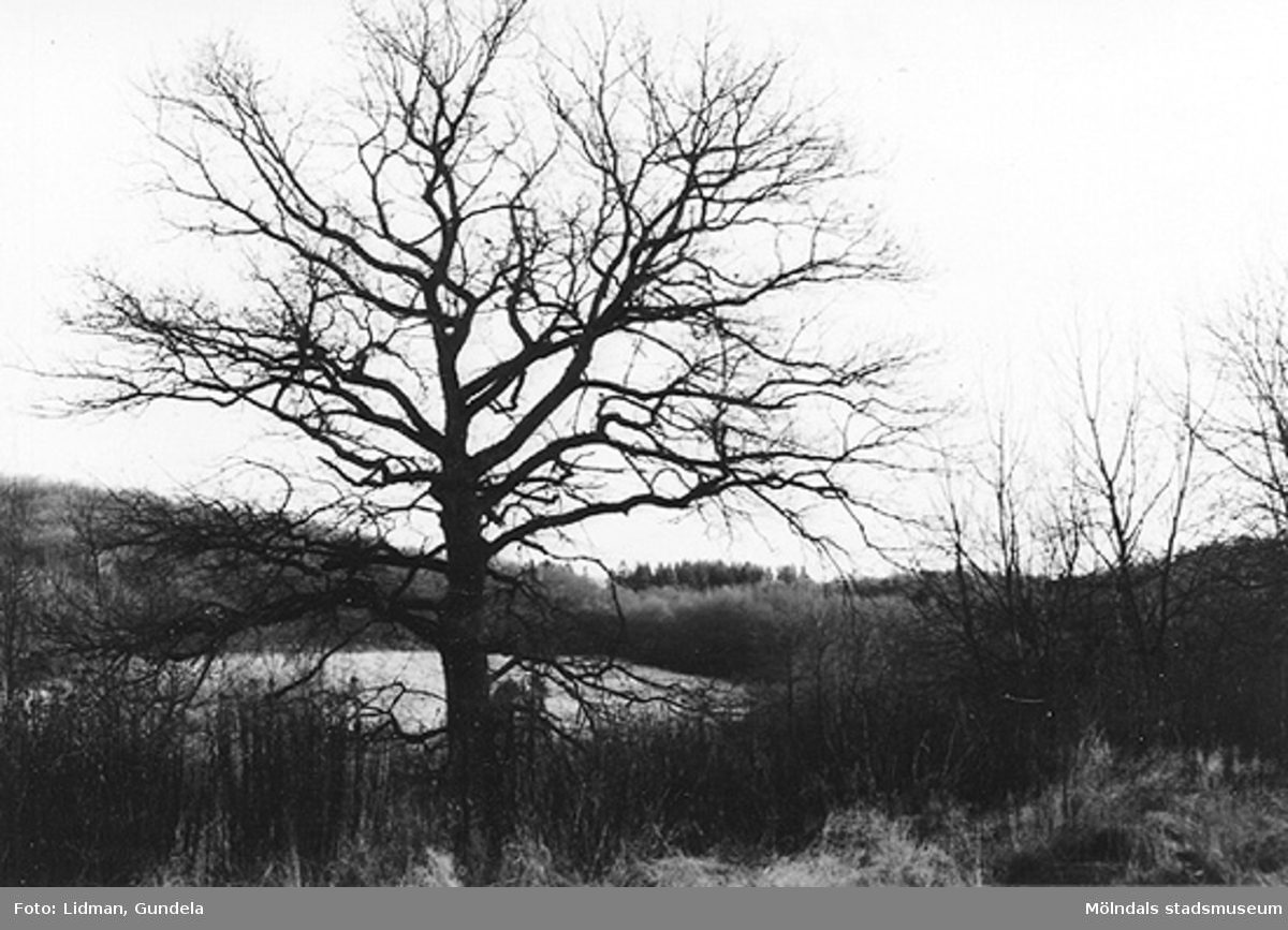 Området fotograferades 1992 av Riksantikvarieämbetet inför en aktuell förtätning.