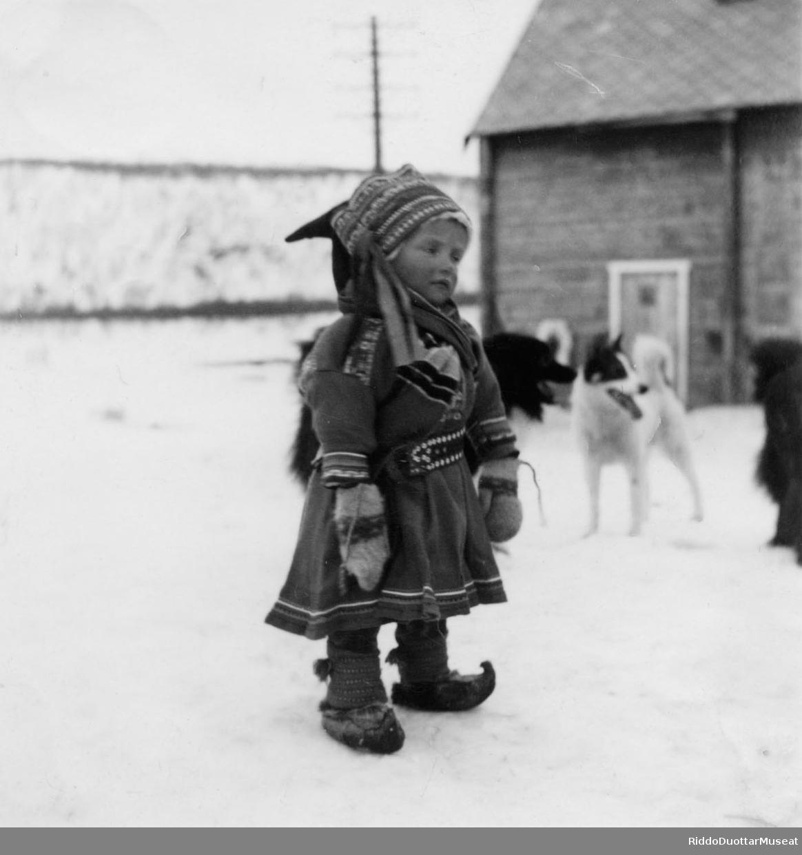 Bártnáš cuožžu olgun, beatnagat duogábealde. En liten gutt står ute, med hunder i bakgrunnen.