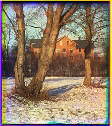 Parktrær i forgunnen med skolebygning i bakgrunnen.