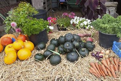 Høstmarked på Kvinnemuseet