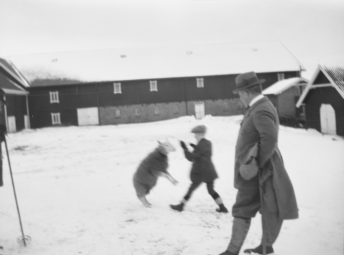 Christian Pierre Mathiesen står i profil, en vinterdag, på plassen mellom driftsbygningene på  Linderud Gård. Han ser på gutt som får en sau til å stå på to ben.