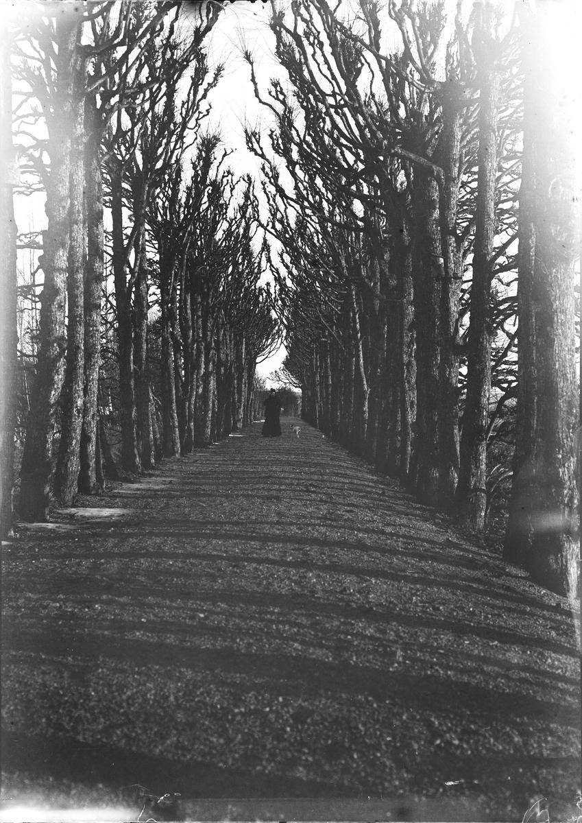 "Dette bildet er tatt i ""Lindehallen"" på Linderud Gård. På avstand ser man en kvinne spaserer med en hund i bånd."