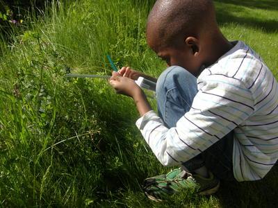 Insektfangst_land2.JPG