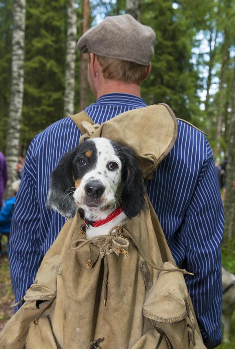 """Hundevalpen """"Komma"""" koser seg i sekken under De nordiske jakt- og fiskedager 2015 (Foto/Photo)"""