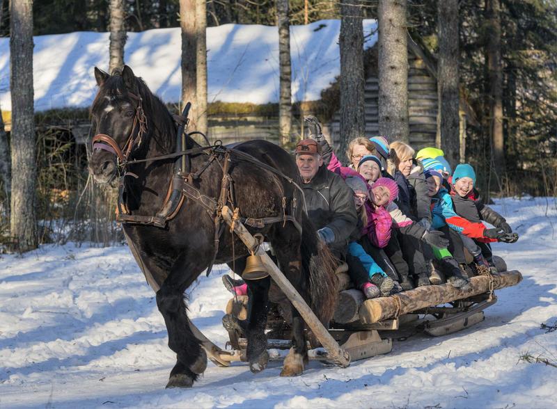 Michael Bølla kjører hest med skoleelever under temadagen fra stubben til tømmervelta 15/2 2016 (Foto/Photo)
