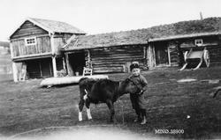Liten gutt med liten kalv