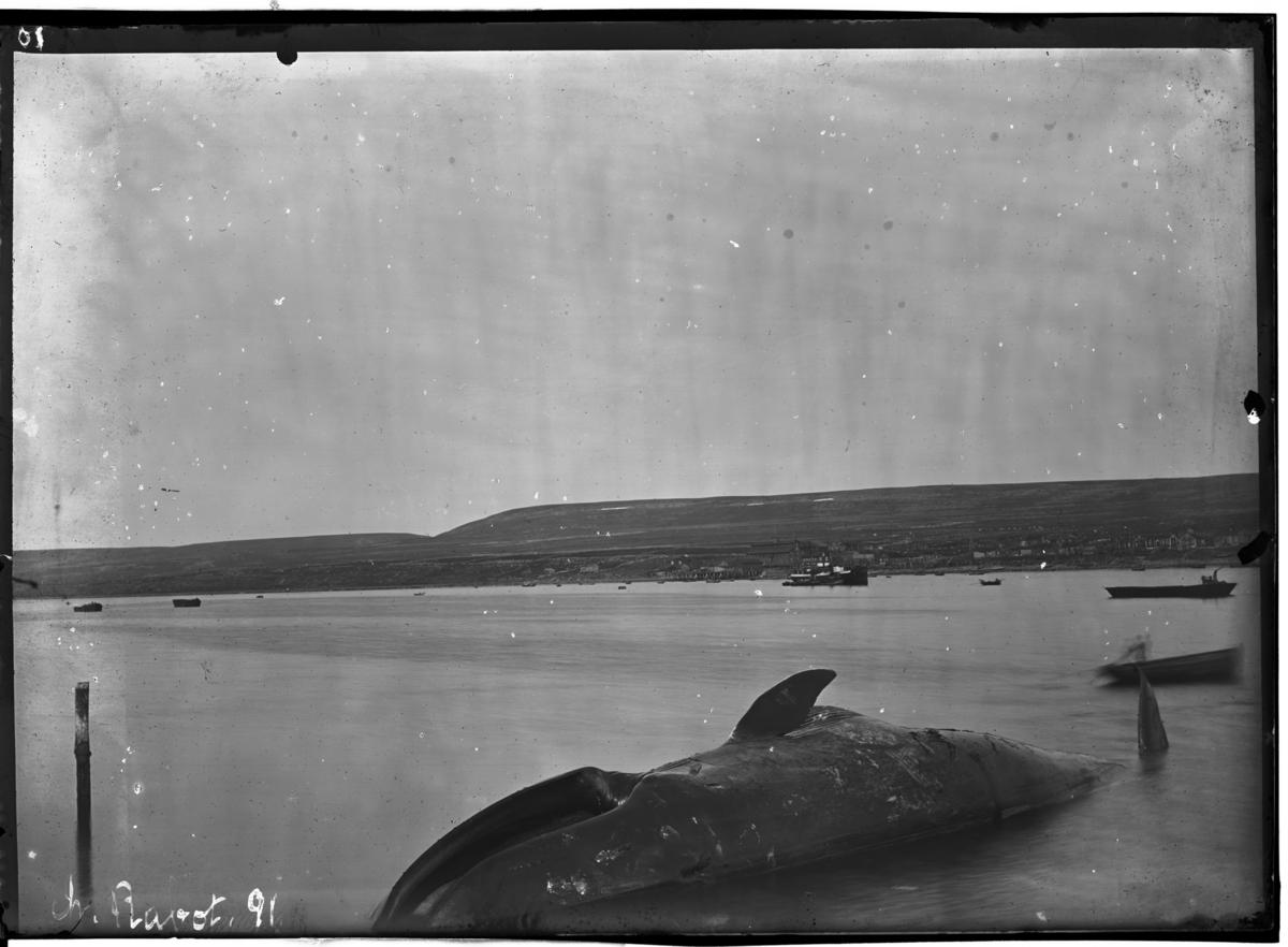 """""""Vadsø sett fra Svend Føyn's Hvalfangerstation"""""""