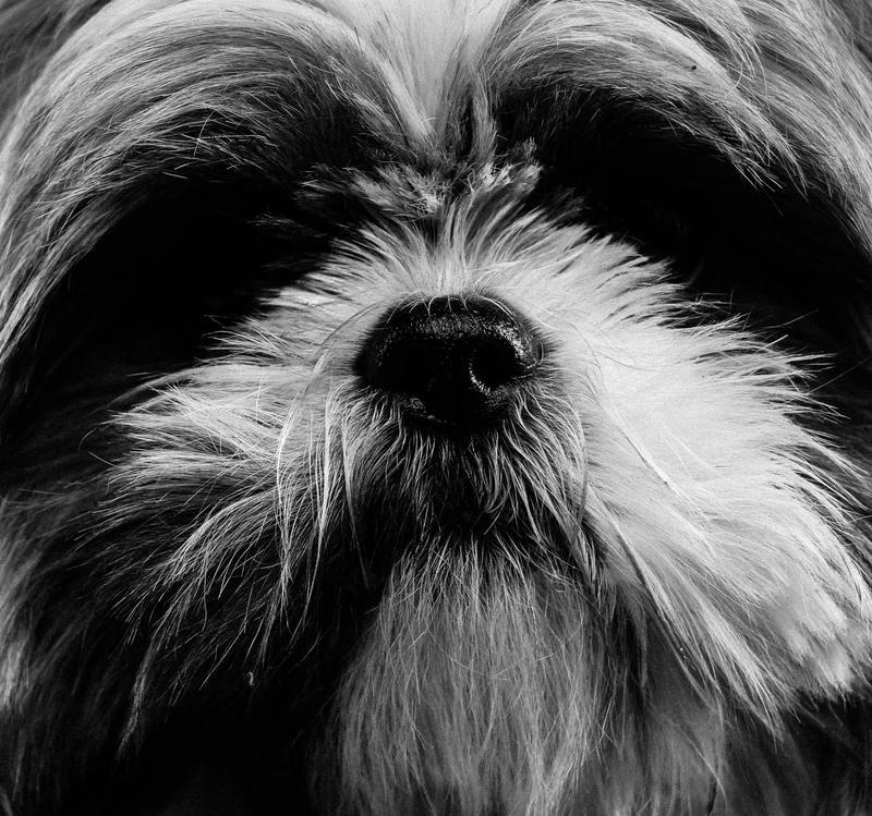 Jeg ser verden svart/hvitt - Men jeg kan føle, høre og se - Det gjør livet fargerikt likevel - Dikt/foto av  Kristine Barli Rundgren