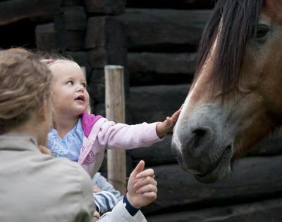Liten pike klapper mulen på hest
