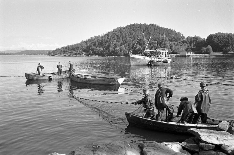 Brislingfiske i Hvervenbukta, Oslo.  1961