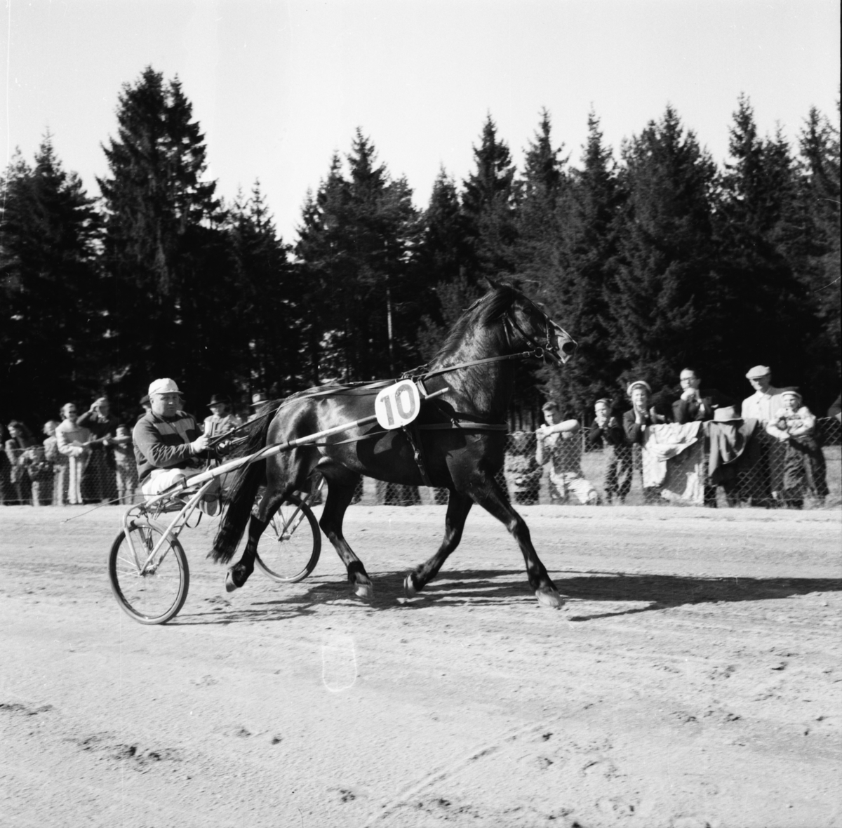 """Vardens arkiv. """"Klosterskogens vårløp. Vinner nr. 10,  Grans-Terma""""  09.05.1954"""