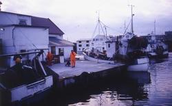 fiske, fiskemottak, reker, menn