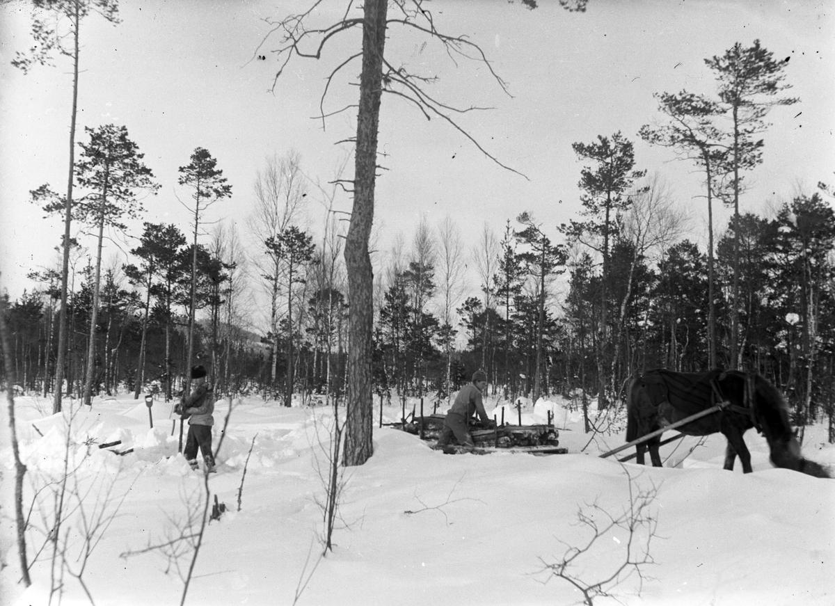 Veden körs fram från Åsmundshyttan nr 9:s hemskog. Arnold Jönsson till vänster och Joel Hansson till höger är körkarlar medan hästen Jonas drar lasset.