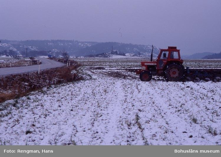 Höstplöjning med traktor och treskärig plog