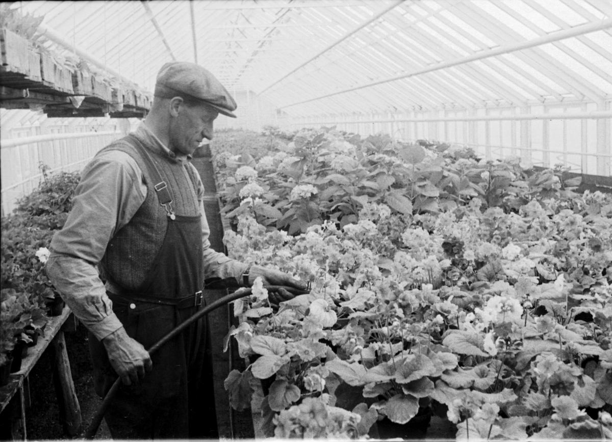 Moums gartneri og blomsterhandel