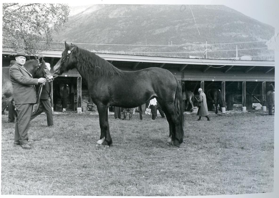 Mønstring av hesten Sokke-Dokka (42).