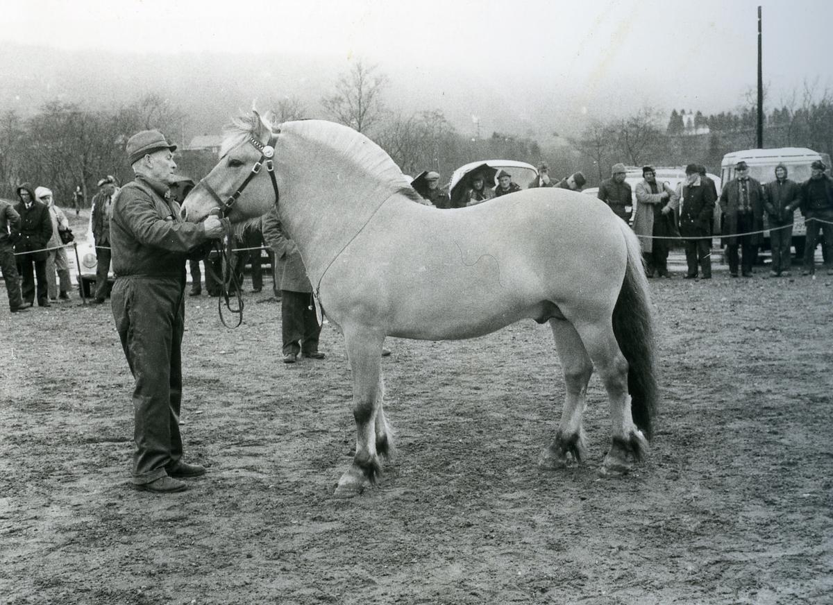 Mønstring av hesten Bjarg 1777.