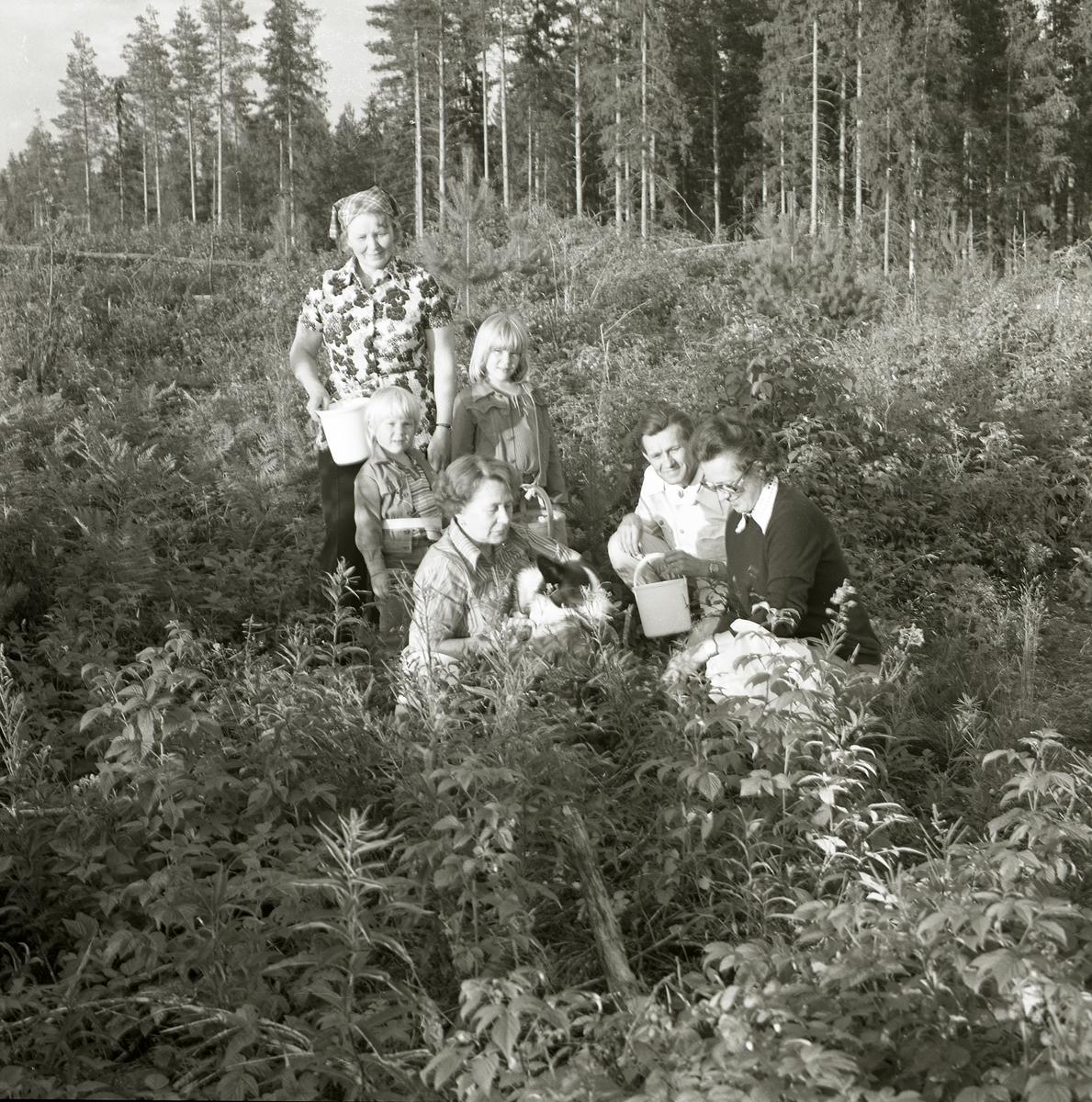 En grupp om fyra vuxna och två barn har gett sig ut bland snåren för att plocka hallon. Det är en solig sommardag 1977 och de bär med sig korgar och hinkar för att lägga hallonen i. Närmast i bild sitter en kvinna på huk och klappar en hund.