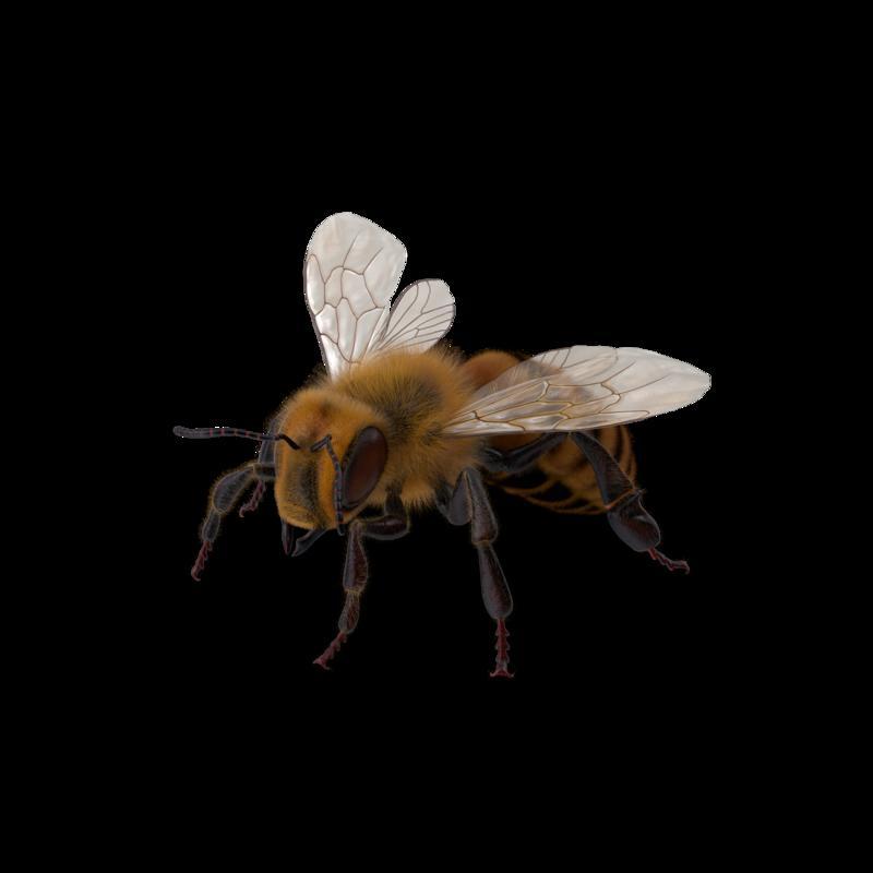 Bee.G03.2k.png