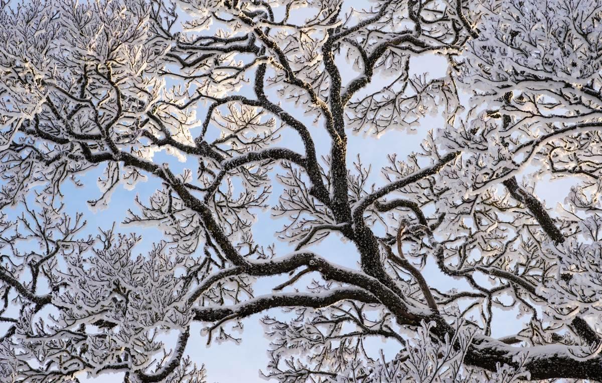 Vinnerbilde desember i fotokonkurransen Det fantastiske treet