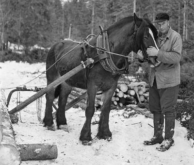 Skogsarbeider Jørgen Larsen med hesten. Bildet er tatt i Svartholtet, Elverum.