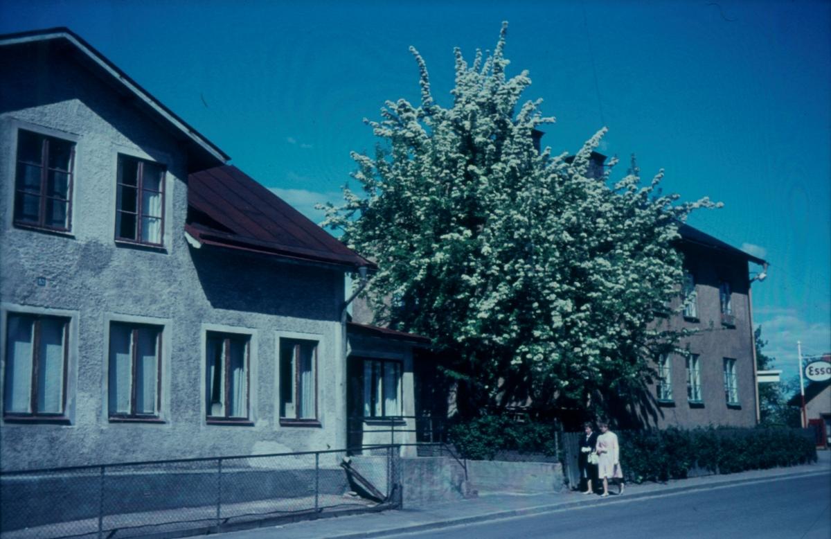 Orig. text: Ola:s specerier. Gama Tanneforsvägen 53 och 51, Esso-mack vid G:la Norrköpingsvägen.