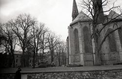 Trädfällning i domkyrkoparken.