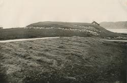 Mjeltehaugen på Giske ca 1922. Vikingtidsgrav.