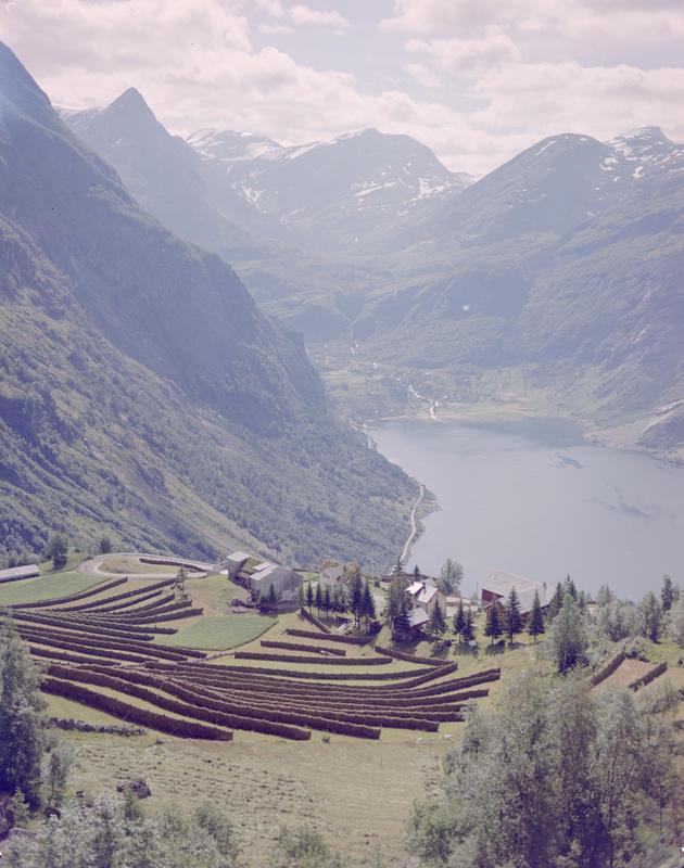 Landskap med fjell, fjord og gårdsbruk 1958-59