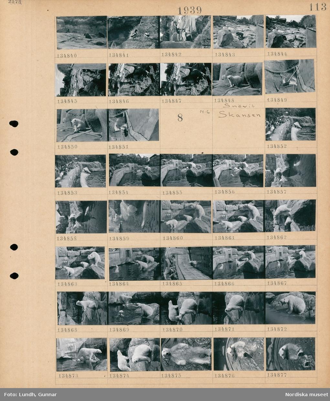Motiv: Skansen; Björnar i en inhägnad, fåglar, en isbjörn Snövit.  Motiv: Skansen; En folksamling står vid en inhägnad och tittar på sälar, en folksamling står vid en inhägnad och tittar på isbjörnar.