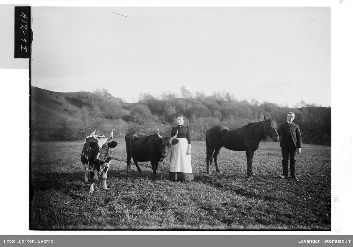 Mann og kvinne lar seg avbilde med en en hest og to kyr. Kyrne trolig Telemarkskyr med  messingbeskyttelse på horna.
