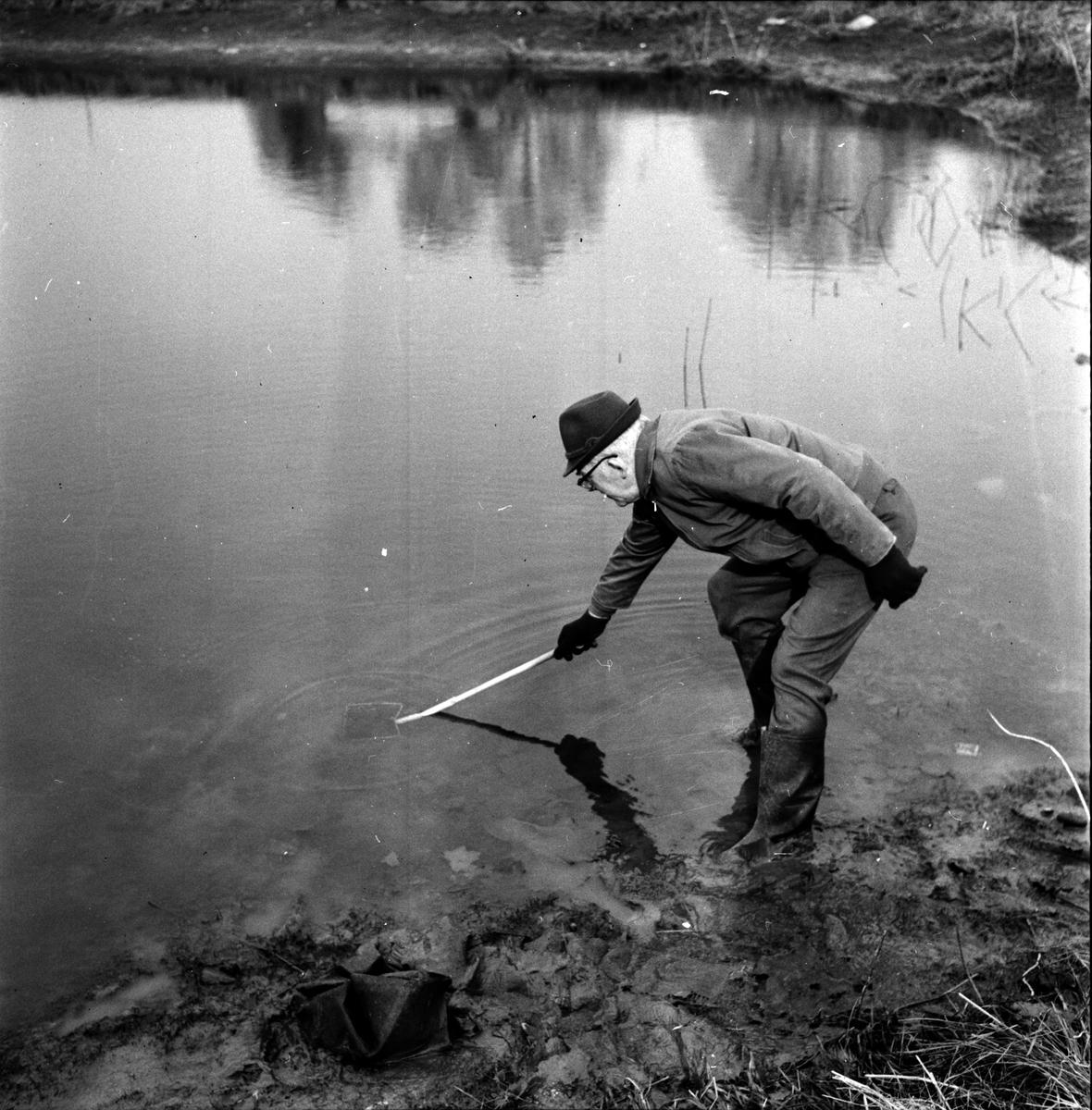 Flugan, Tömmer näckrosdammen, 24 April 1965