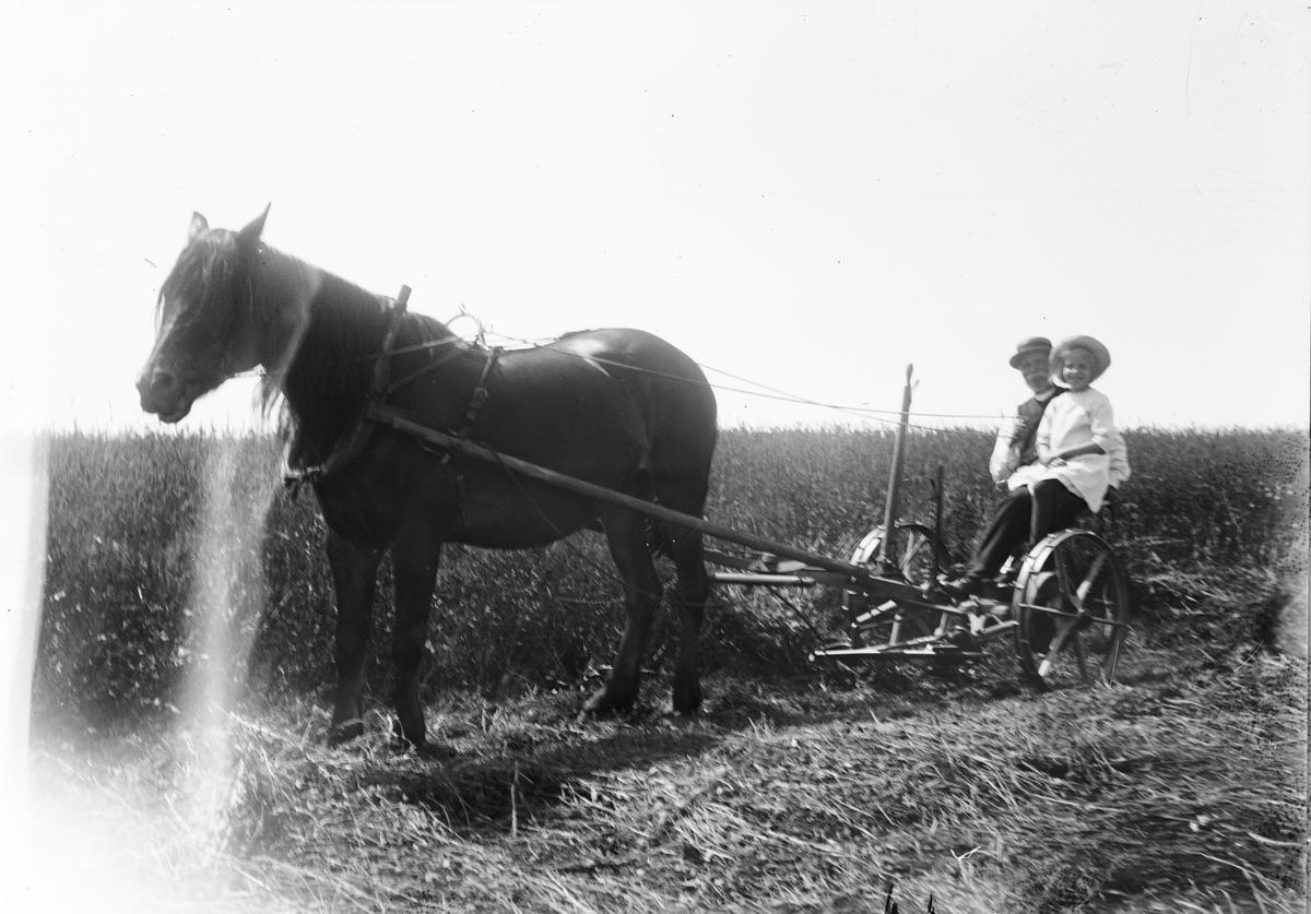 Svens Olle och Marit Liljefors kör slåttermaskin dragen av hästen Freja, Svensgården, Dalarna 1919