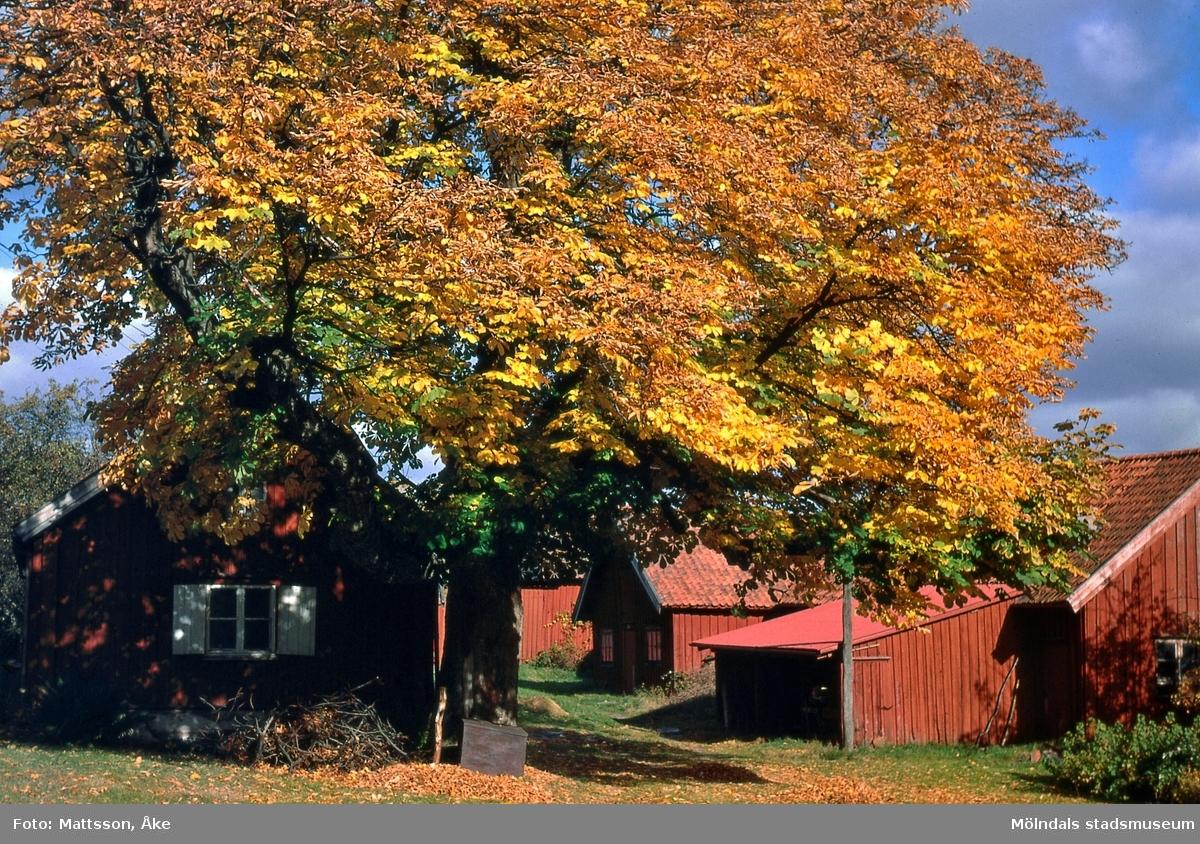 Det gamla huset på Alegårdsslätt i Alvered, Mölndal, på 1960-talet. Huset var från 1700-talet.