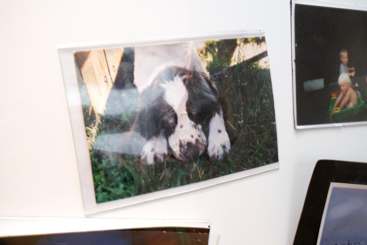 Bilde av hunden Balder som valp.