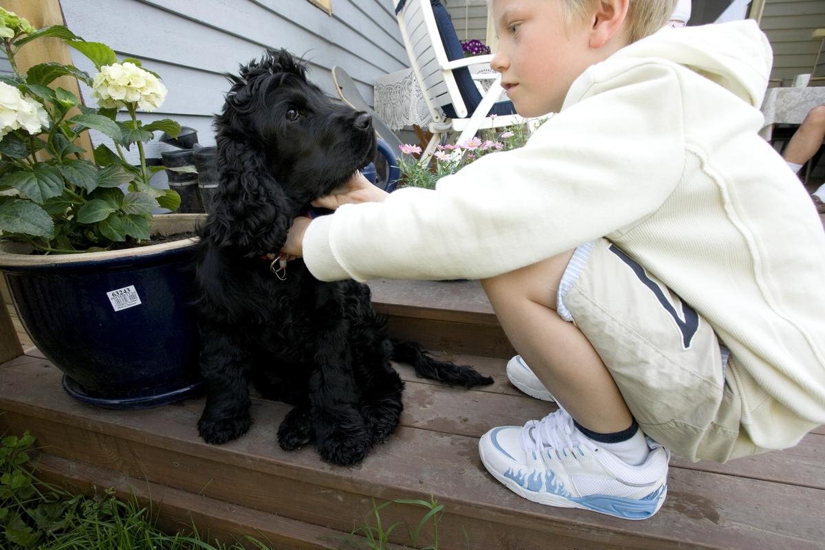 Hunden Emmy sammen med et barn i familien