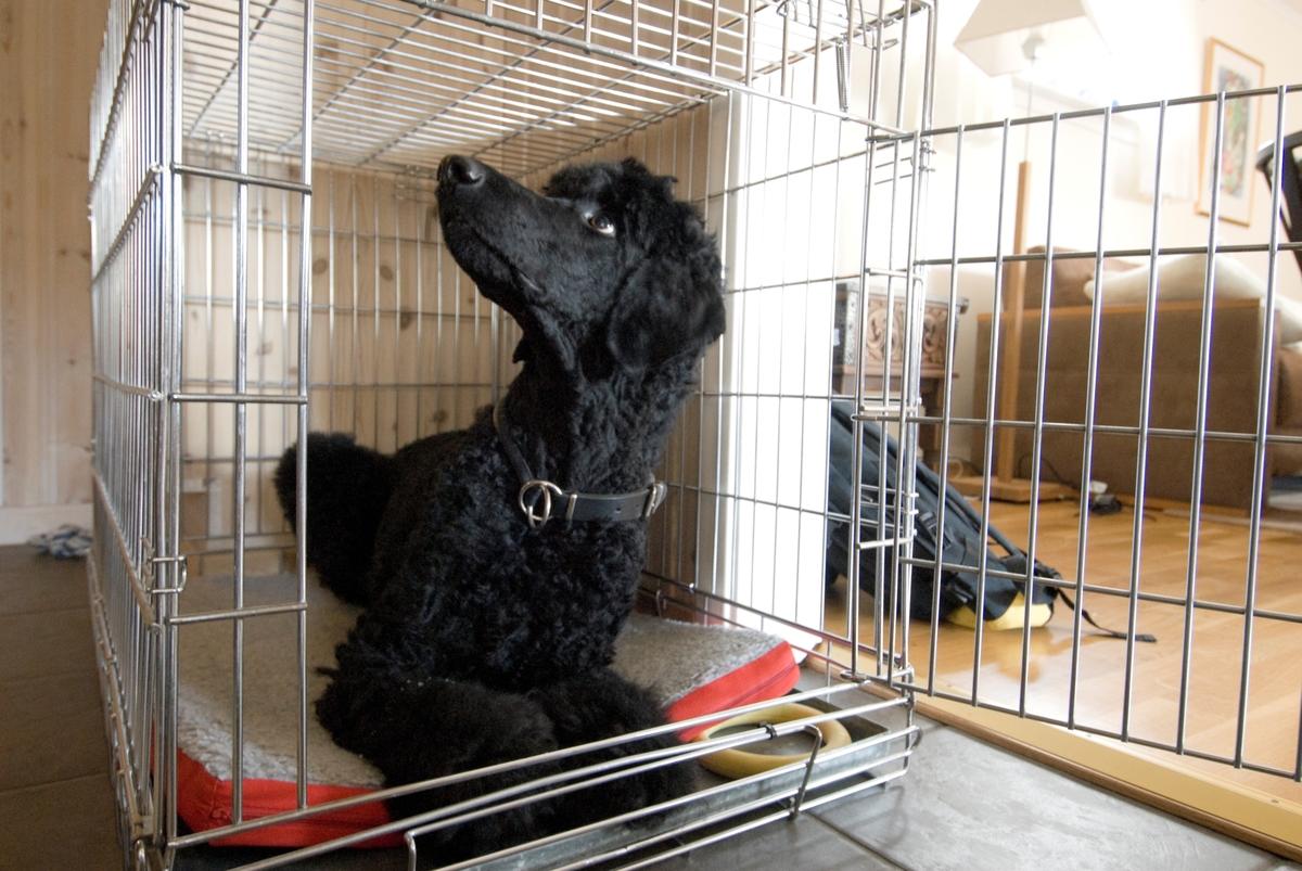 Hunden Pedro i et hundebur.
