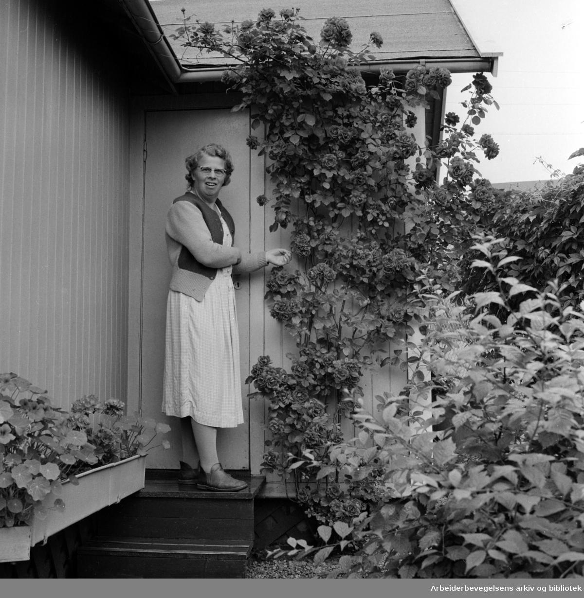 Rodeløkka Kolonihage. Sally Svanmo viser stolt fram de flotte rosene i hytteveggen. Juli 1957
