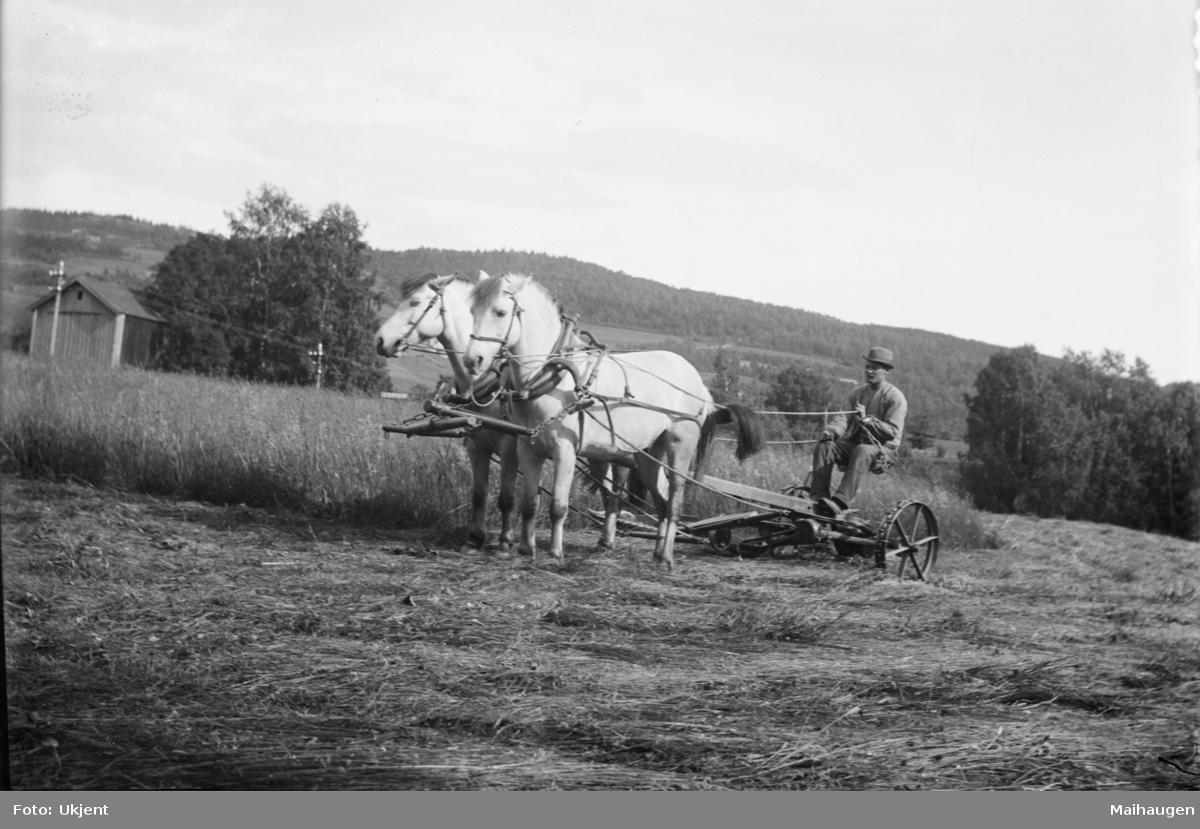 Slåttonn, to hester drar slåmaskin